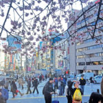 Watch the Snow, Watch the Cherry Blossom Season in Japan