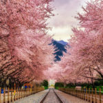 9 Locations for Cherry Blossoms Outside of Japan