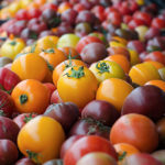 Eight Heirloom Tomatoes that have Delicious old Time Flavor