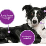 Early Symptoms of Cancer in Your Dog