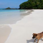 Fun Things to do in Calaguas