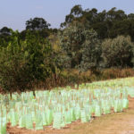 Australia wants to plant one billion trees to fight global warming